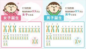 染色体には2種類ある