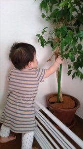 観葉植物は移動
