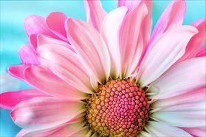 大きい春の花